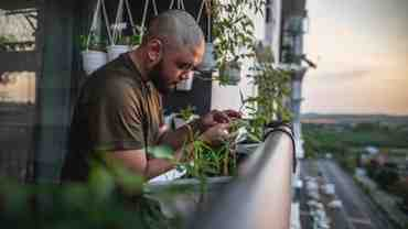"""""""Communiquer"""" avec les plantes grâce à la technologie"""