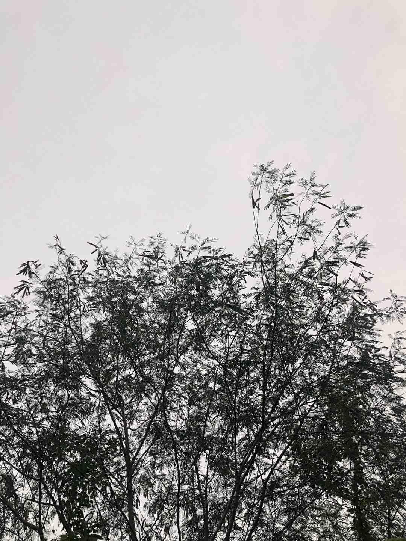 Rats, moustiques tigres et serpents arboricoles