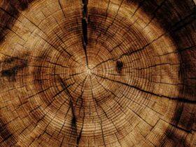 Comment  Construire une clôture en bois
