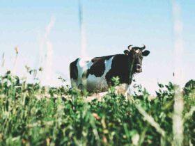 Comment  Faire chauffer du lait sans le bruler