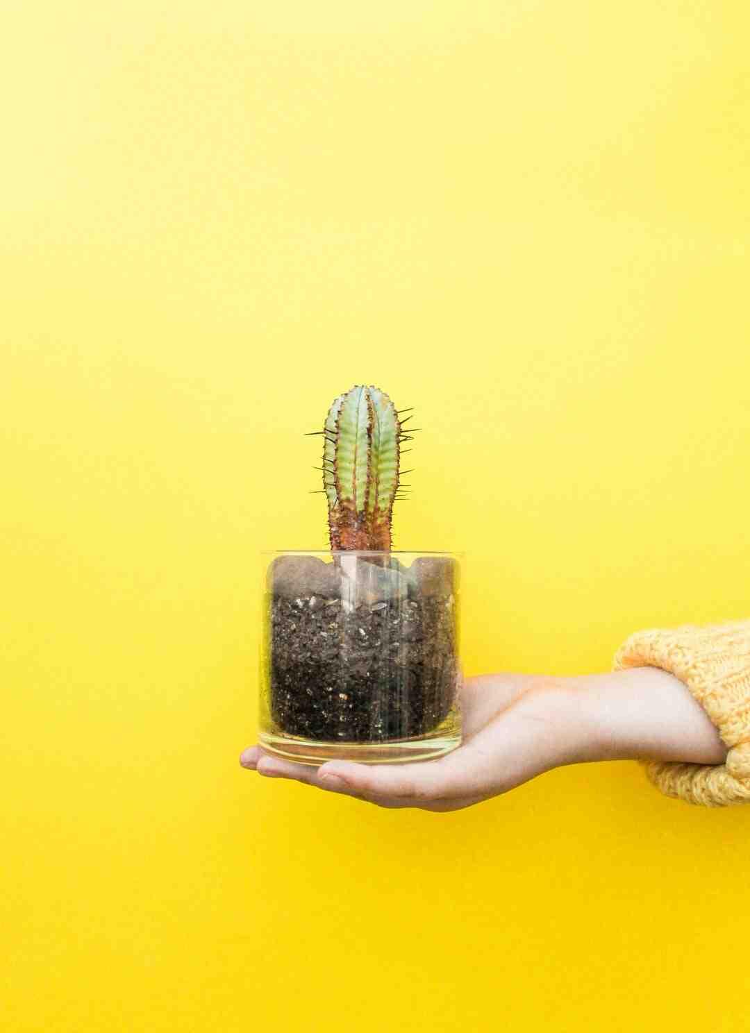 Comment  Faire pousser des concombres en pot
