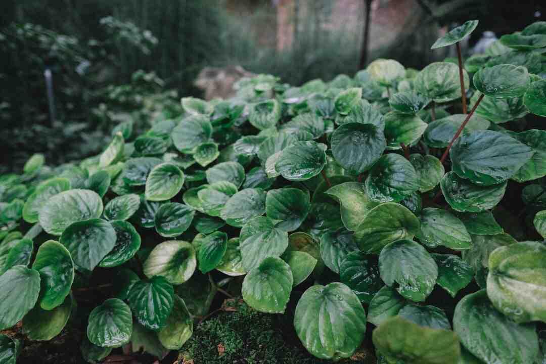 Comment  Nourrir des plantes
