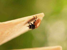 Comment  Se débarrasser des fourmis de façon naturelle