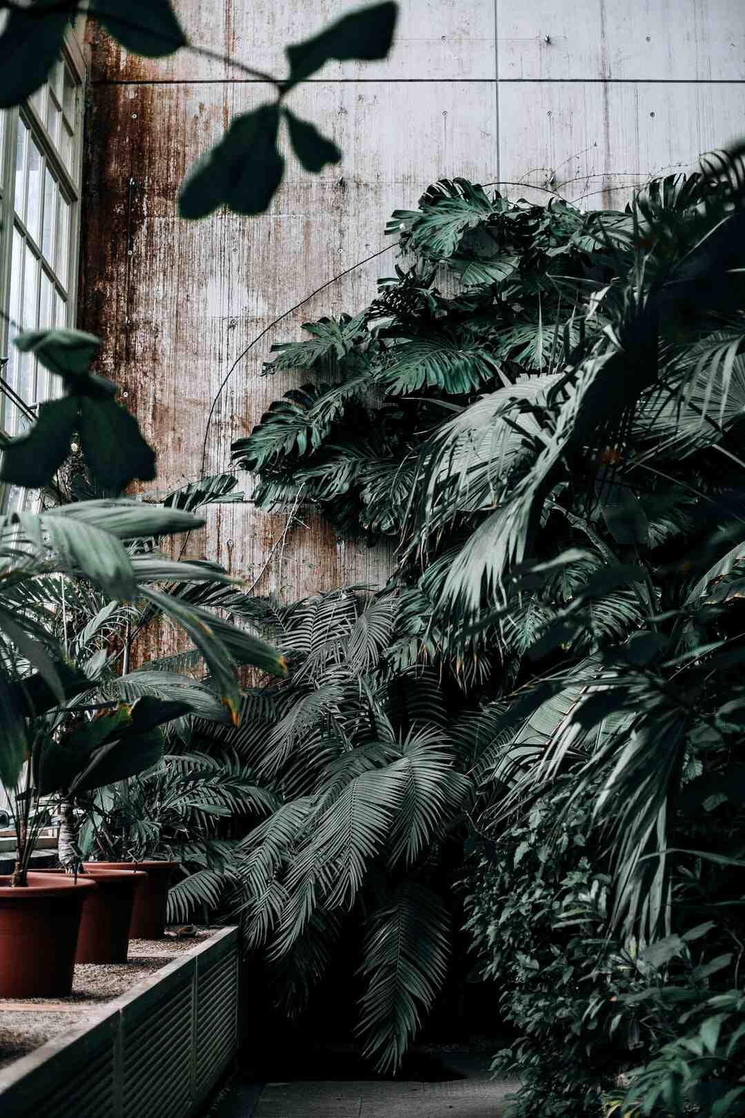 Comment  Utiliser des mèches pour arroser les plantes