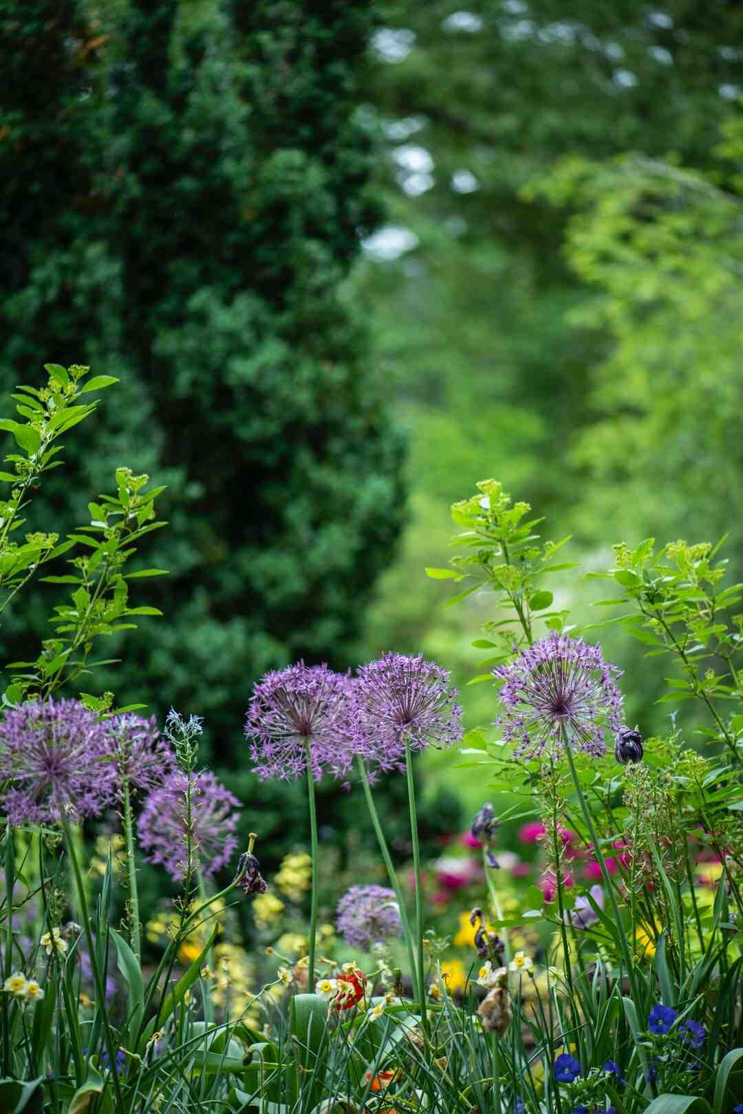 Comment  Utiliser du peroxyde d'hydrogène dans le jardin