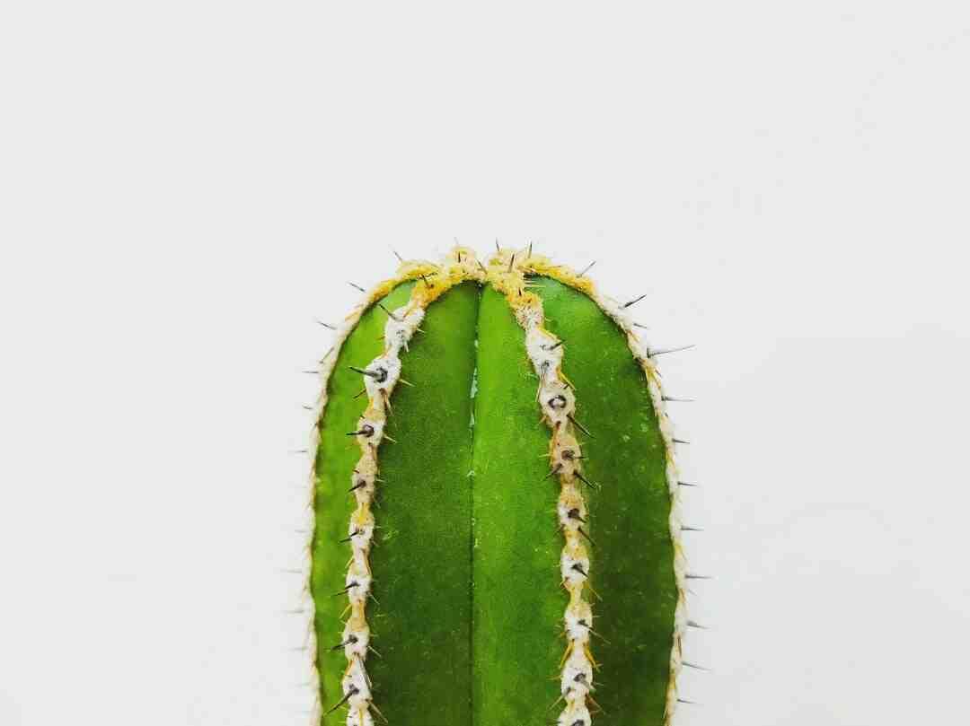 Comment bien entretenir un cactus ?