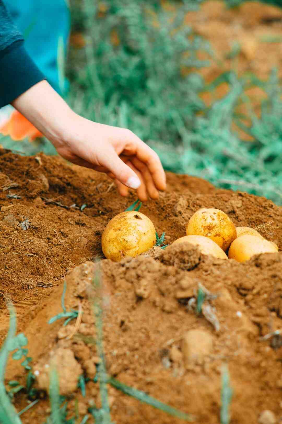 Comment équilibrer un sol trop riche en azote ?