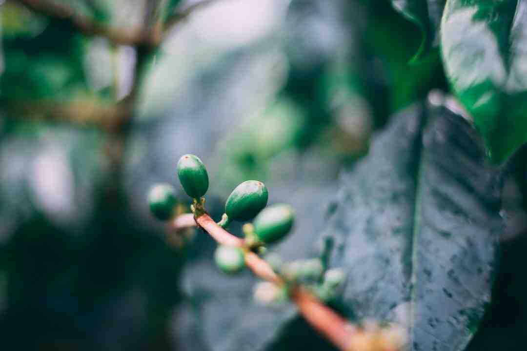Comment faire germer des graines de haricots ?
