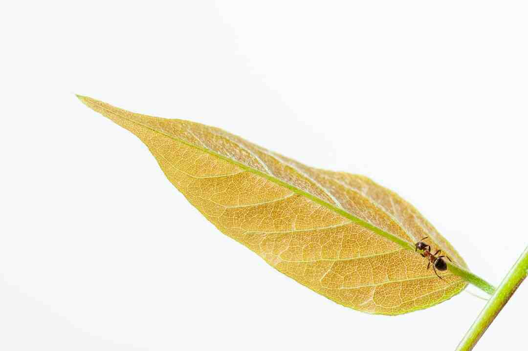 Comment faire pour détruire des fourmis ?