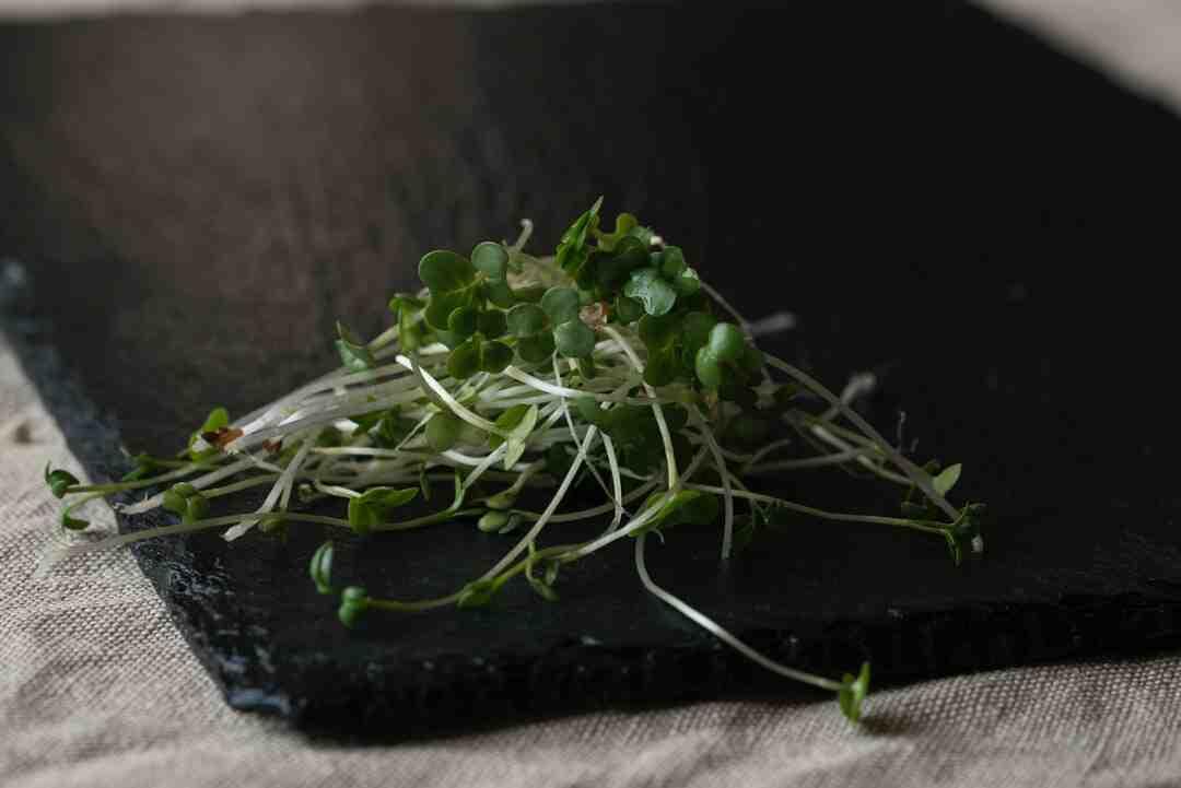 Comment faire pousser des haricots ?