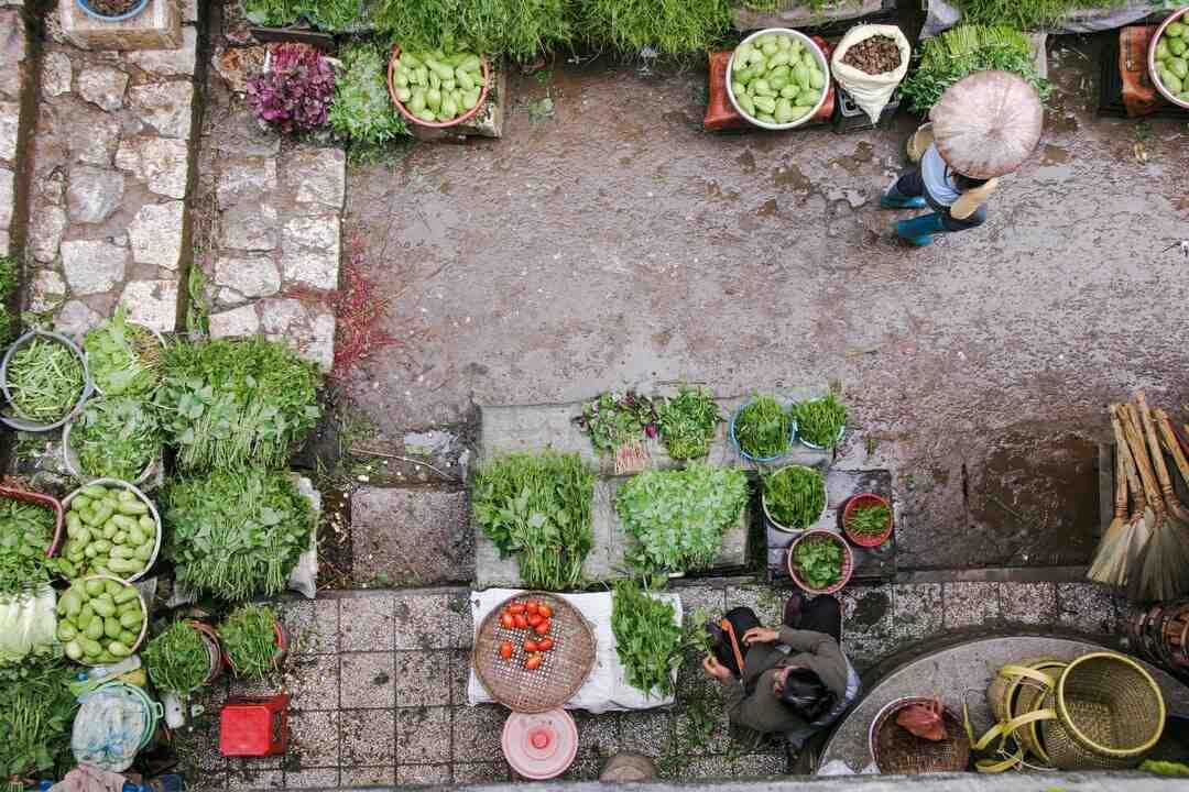 Comment planter des tomates en pleine terre ?