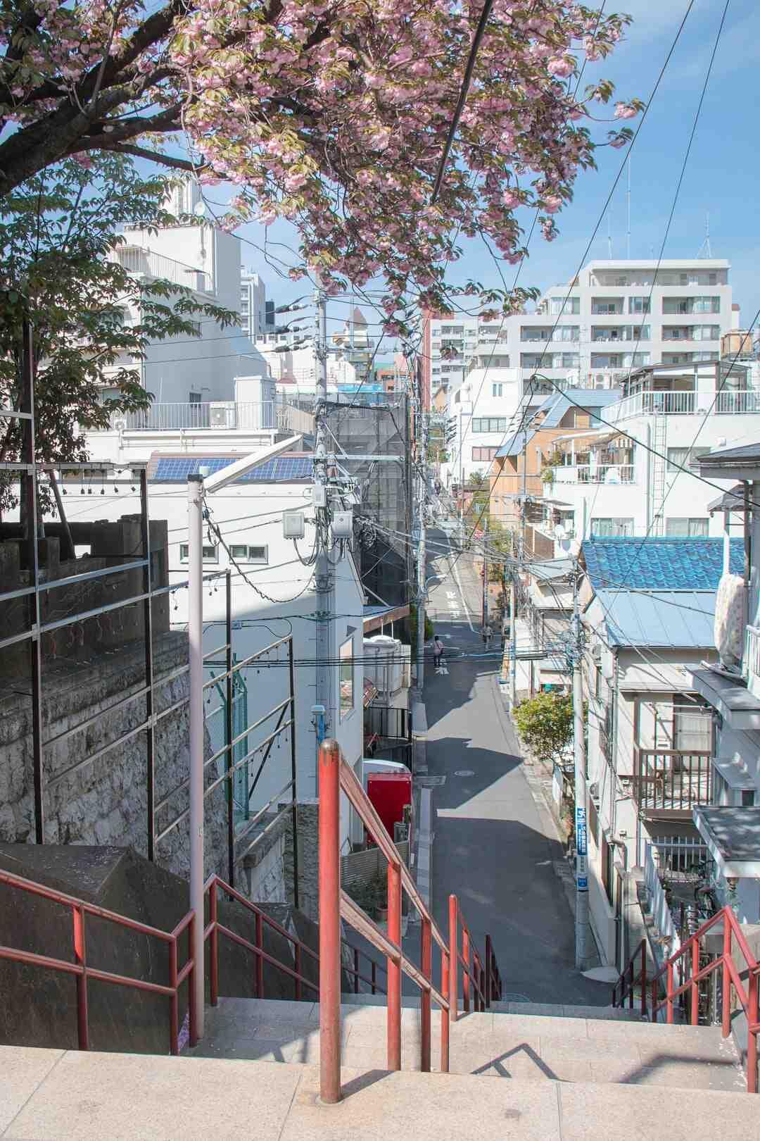 Comment se débarrasser des anémones du Japon ?
