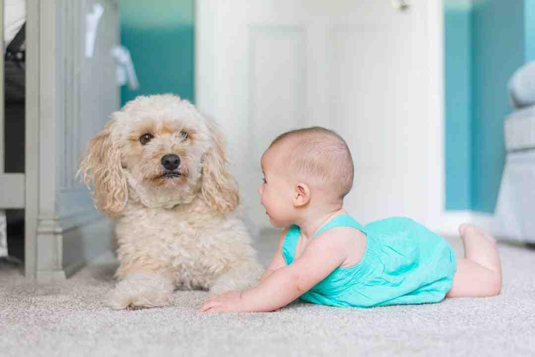 Comment utiliser le bicarbonate de soude sur un tapis ?