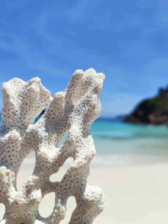 Est-ce que les requins passent la barrière de corail ?