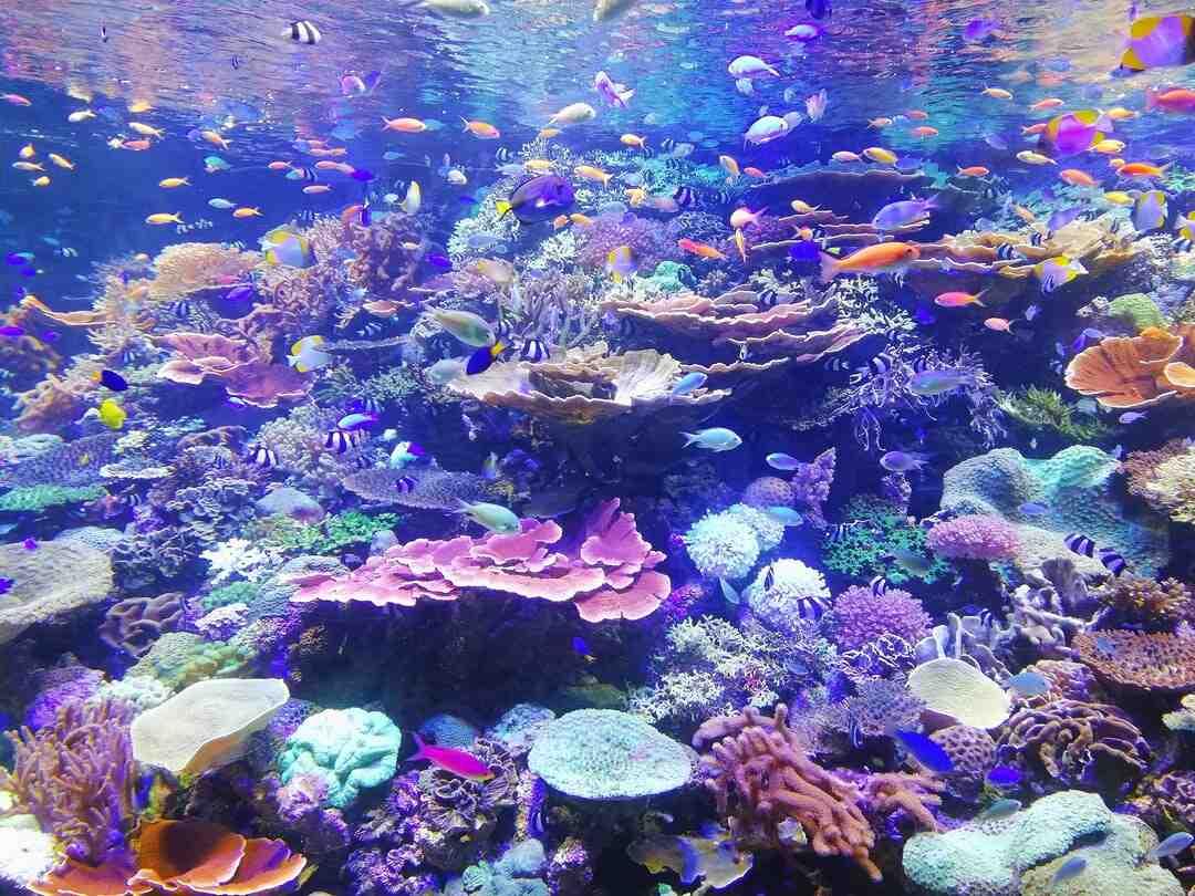 Quel est le rôle du corail ?
