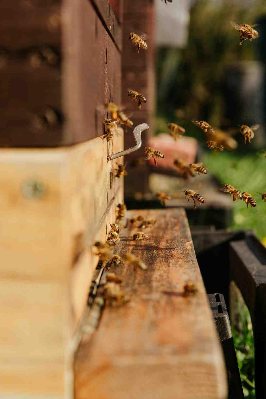Comment  Déplacer une colonie d'abeilles