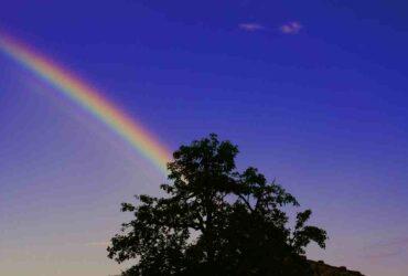 Comment  Faire un dragon arc‐en‐ciel (rainbow) dans DragonVale