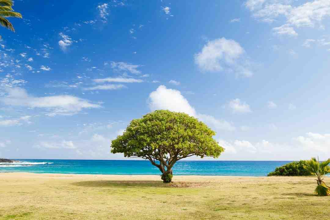 Comment  Mesurer la taille d'un arbre