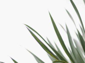 Comment  Mesurer le taux de croissance d'une plante