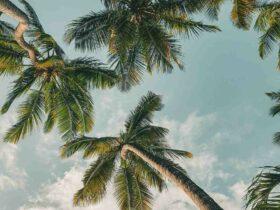 Comment  Préparer ses vacances