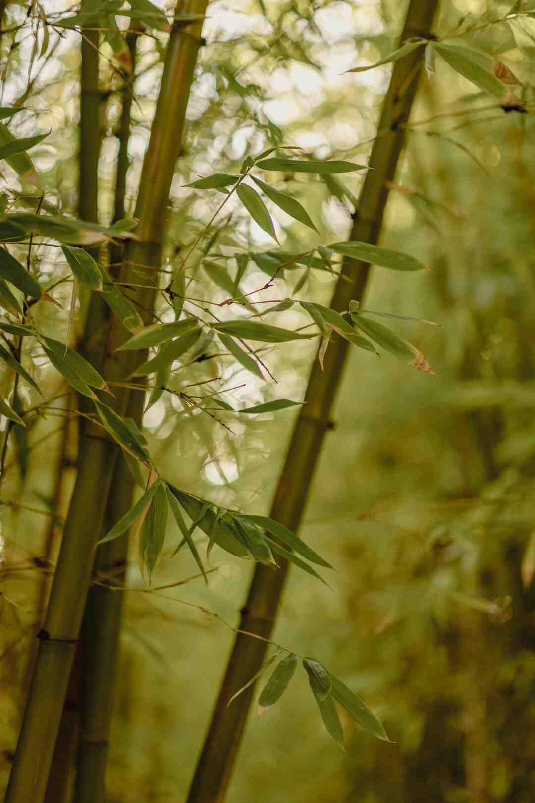 Comment  Se débarrasser des bambous