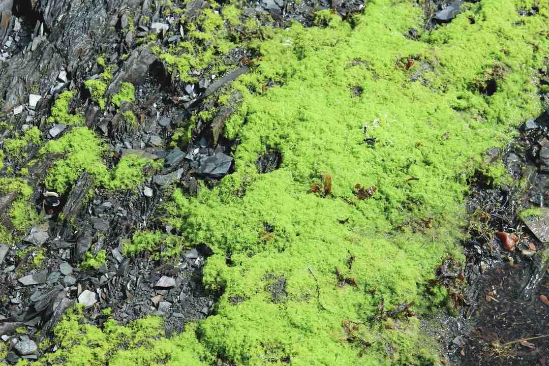Comment enlever les algues ?