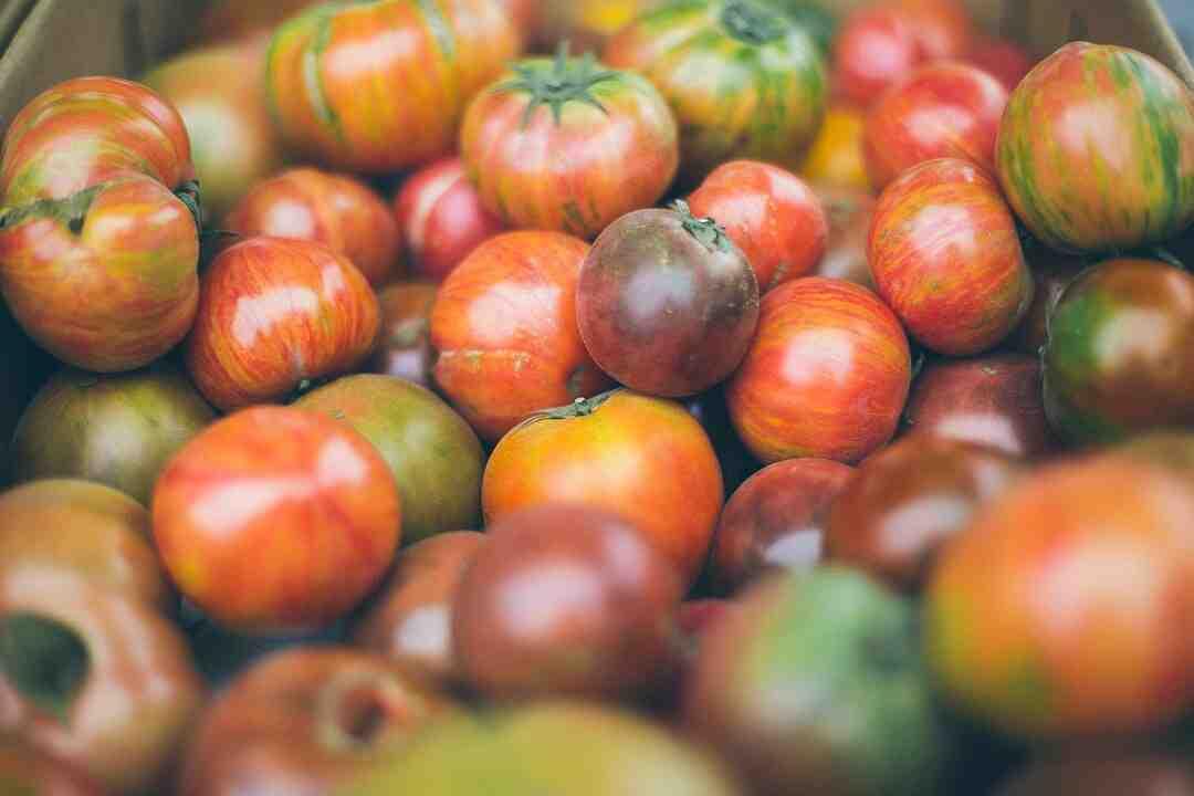 Comment pousser les tomates ?