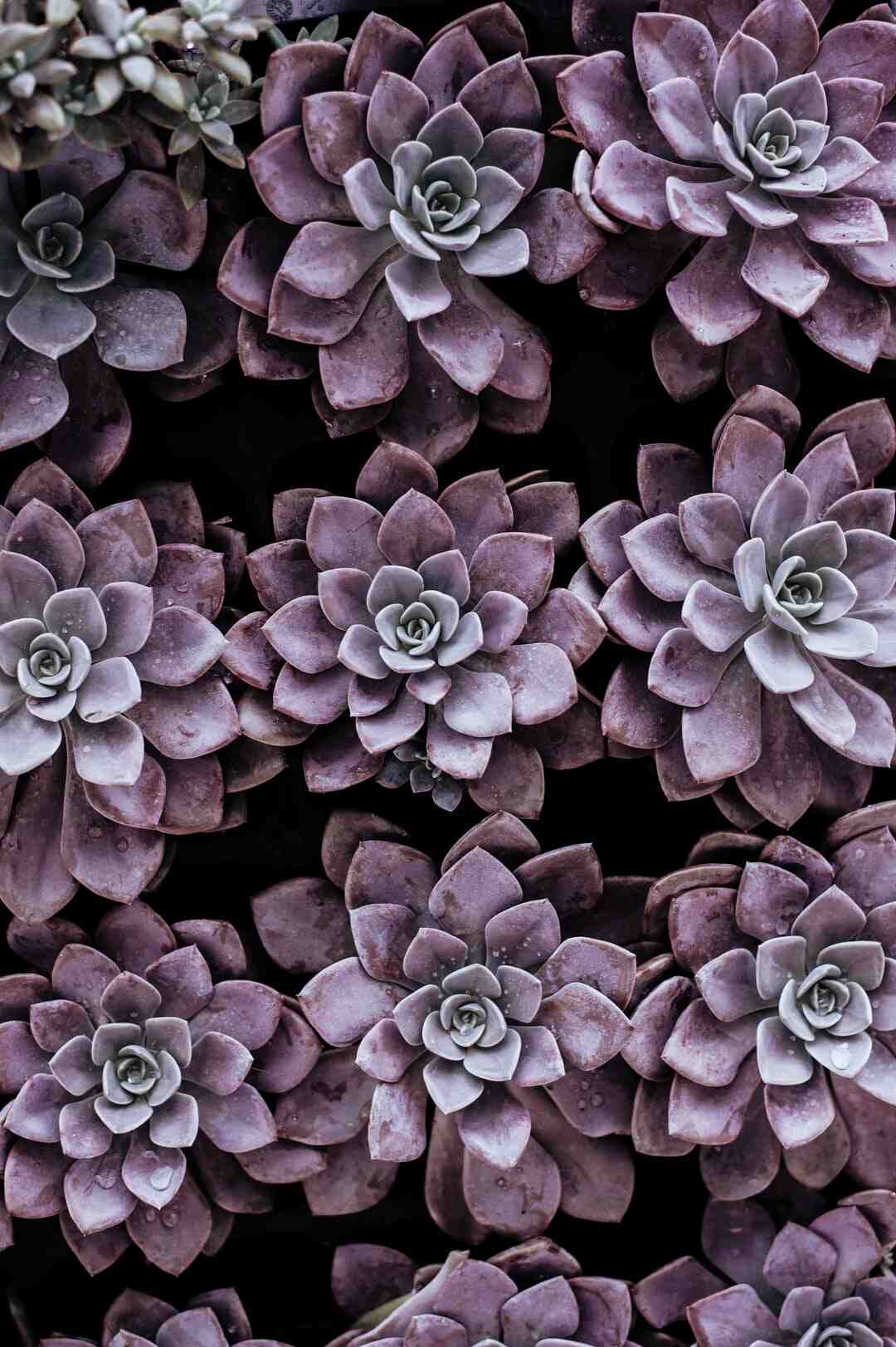 Comment rempoter une plante extérieur ?