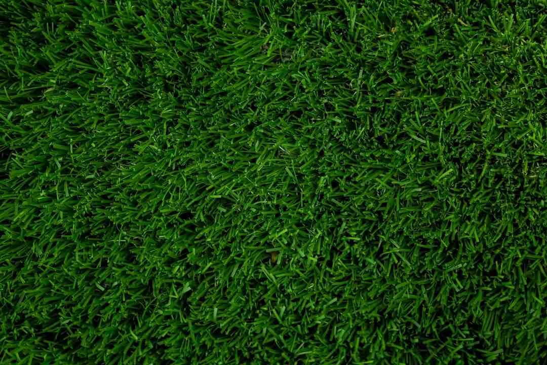 Comment tuer définitivement les mauvaises herbes ?