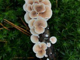 Comment  Cultiver des champignons en intérieur