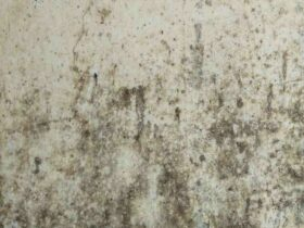 Comment  Vérifier la présence de moisissures