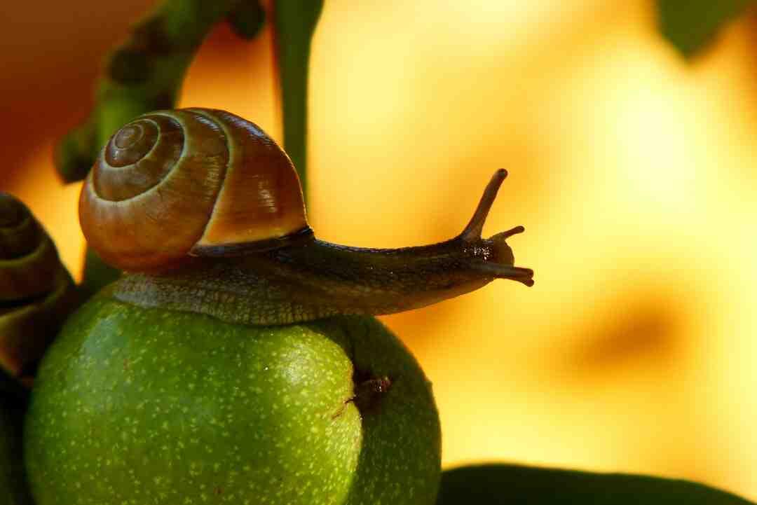 Comment enlever du slime sec ?