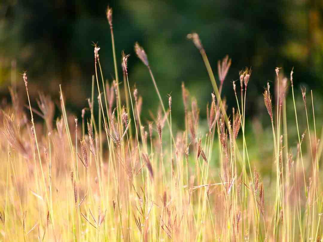 Comment faire crever de l'herbe ?