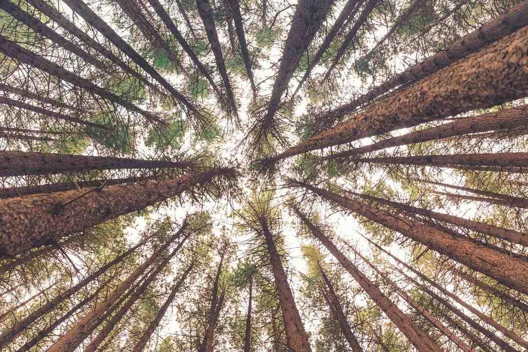 Comment faire des racines à partir d'une branche ?