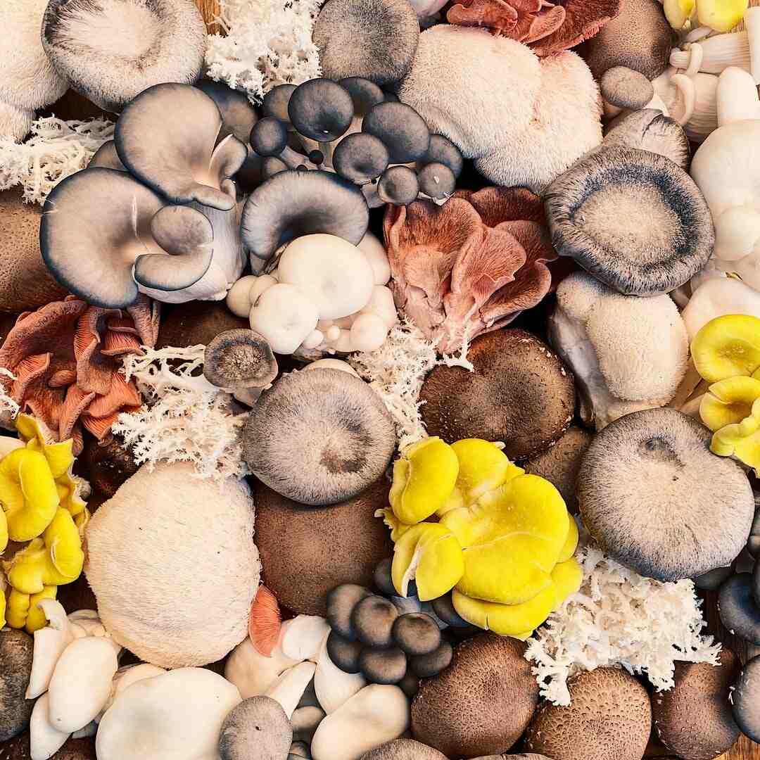 Comment faire pousser des champignons de Paris dans sa cave ?