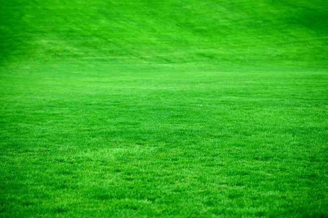 Comment préparer la terre avant de semer du gazon ?