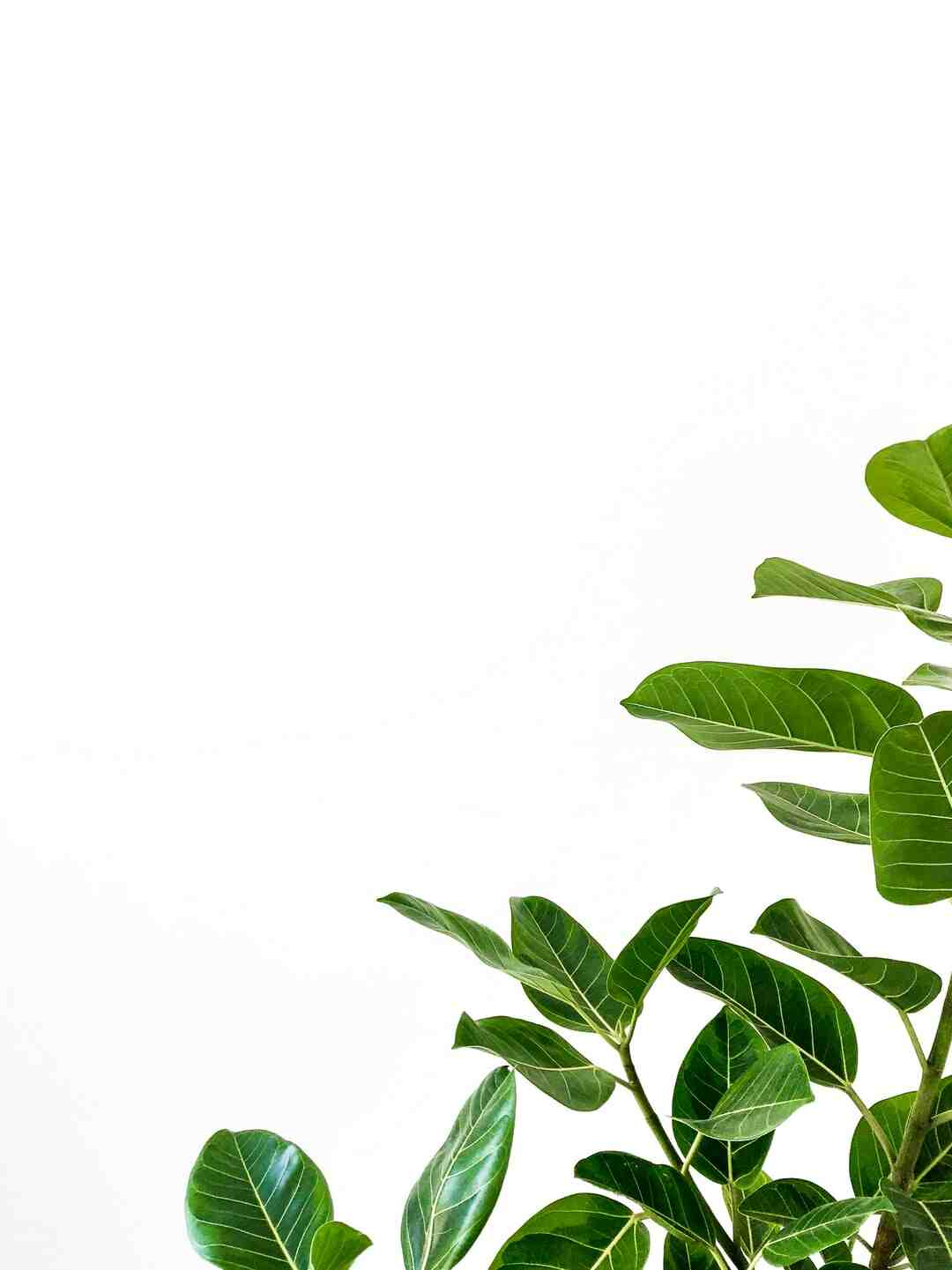 Comment ressusciter des plantes ?