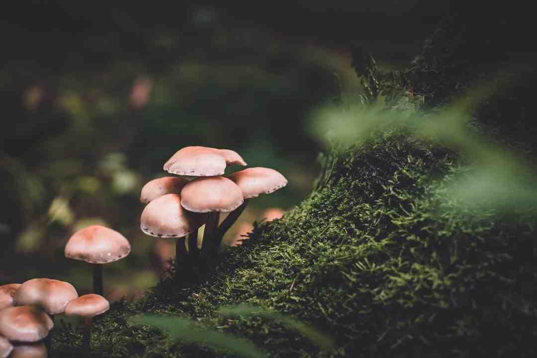 Comment utiliser mycélium ?