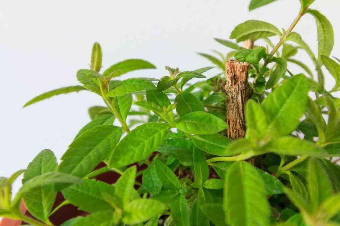 Quelle terre pour rempoter les plantes grasses ?