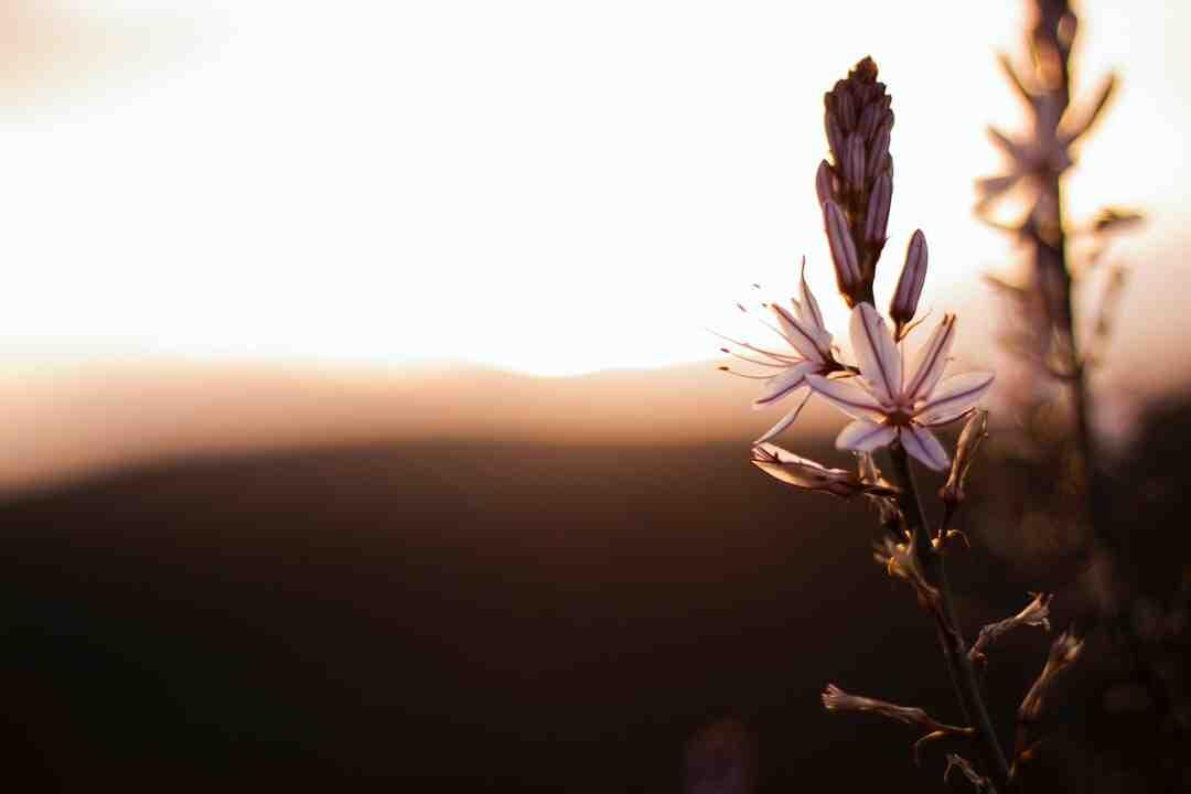 Comment la vanille Est-elle pollinisée naturellement ?